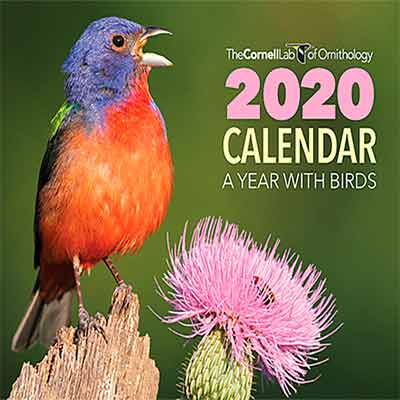 free 2020 bird calendar from the cornell ornithology lab - Free 2020 Bird Calendar from the Cornell Ornithology Lab
