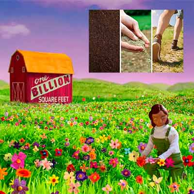 free wildflower seeds from air wick - FREE Wildflower Seeds From Air Wick